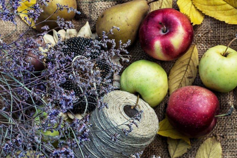 Manzanas cosechadas imagen de archivo libre de regalías