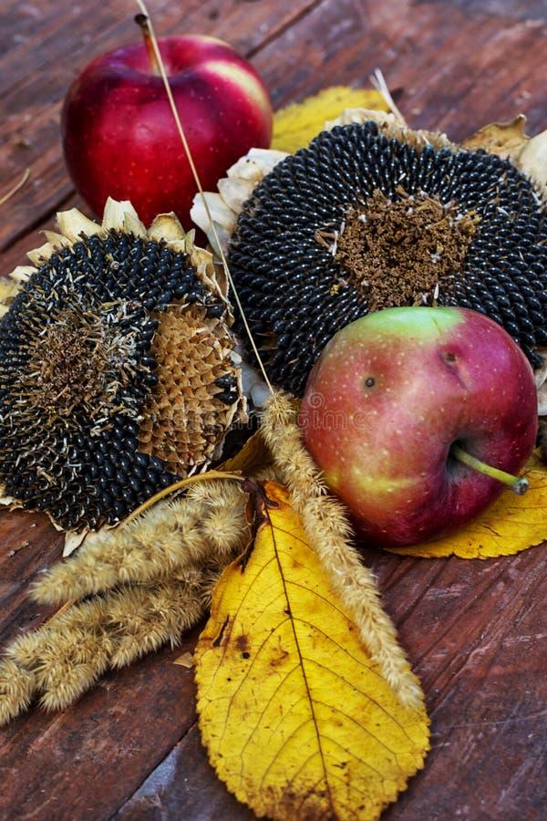 Manzanas cosechadas fotografía de archivo
