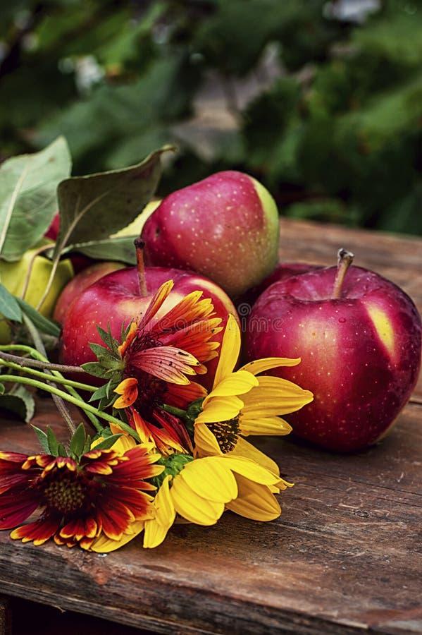Manzanas cosechadas foto de archivo