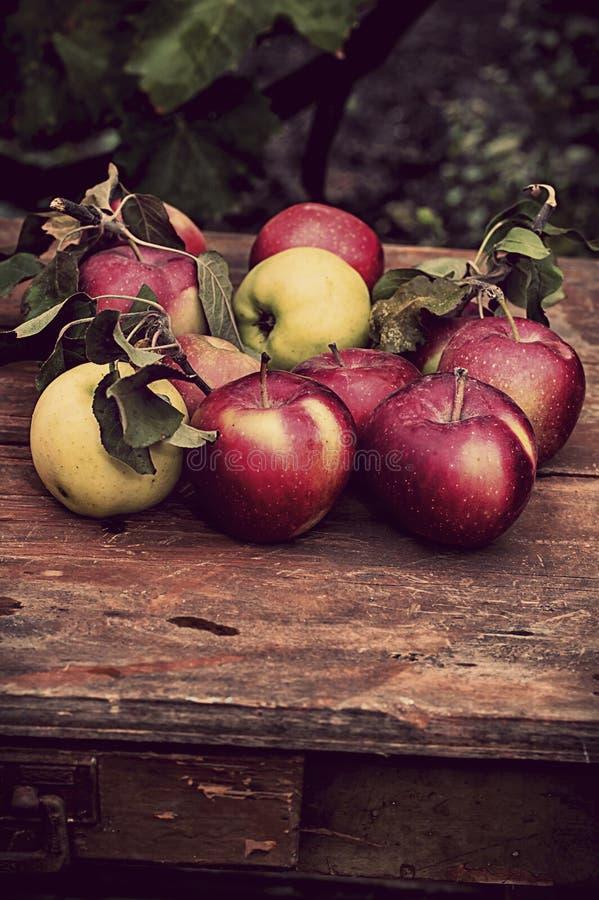 Manzanas cosechadas imagen de archivo