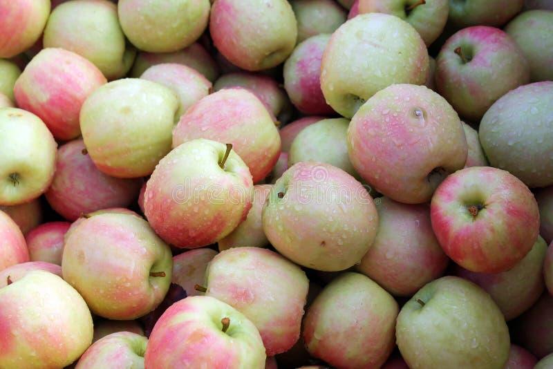 Manzanas de Honeycrisp para la venta imagen de archivo libre de regalías