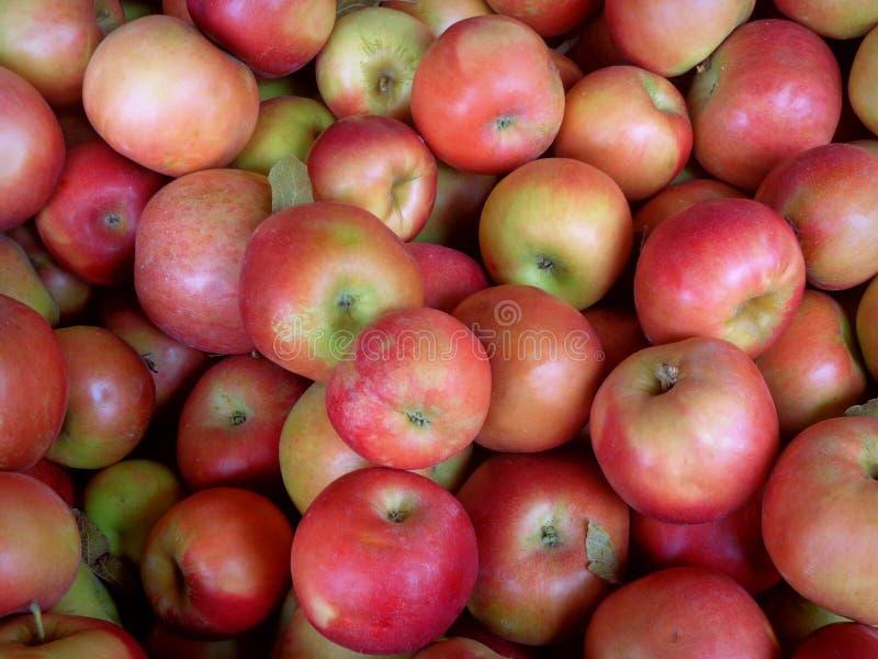 Manzanas de Ida Red imagen de archivo libre de regalías
