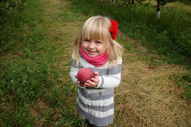 Manzanas de la cosecha de la chica joven imagen de archivo libre de regalías