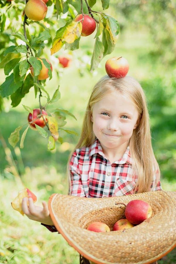 Manzanas de la cosecha del ni?o en granja en oto?o Ni?a que juega en huerta del manzano Nutrici?n sana imagen de archivo