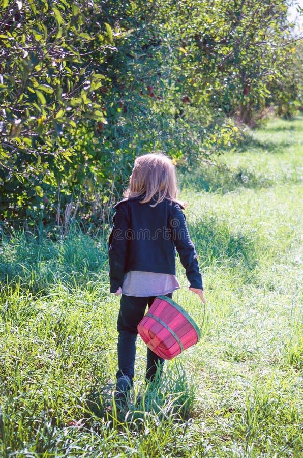 Manzanas de la cosecha de la muchacha imagen de archivo libre de regalías