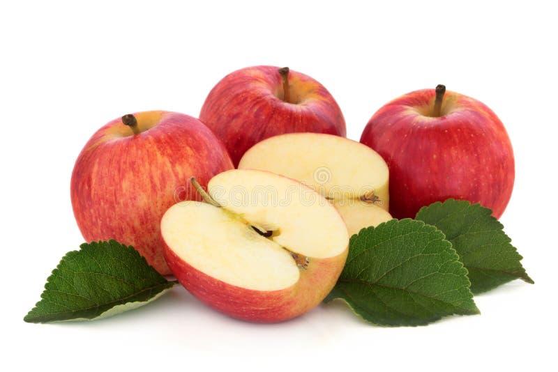Manzanas de la gala foto de archivo libre de regalías