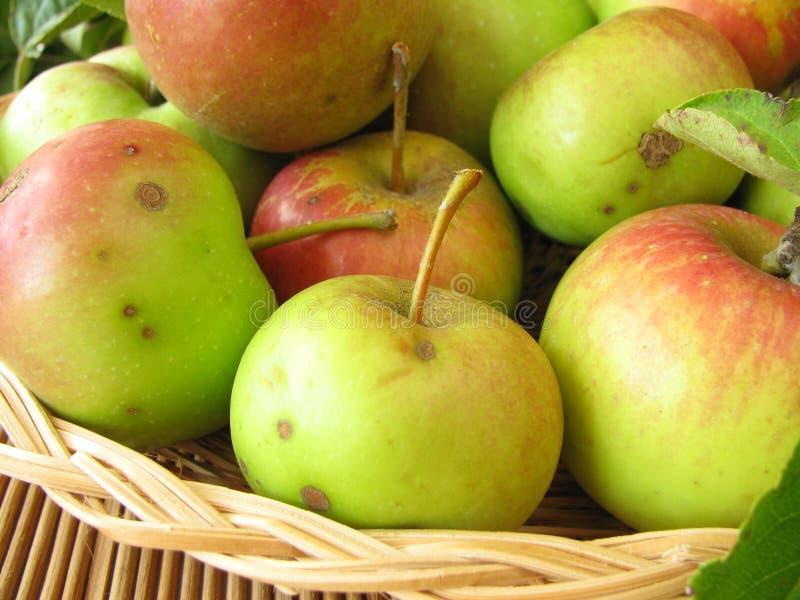 Manzanas de la huerta del prado fotografía de archivo
