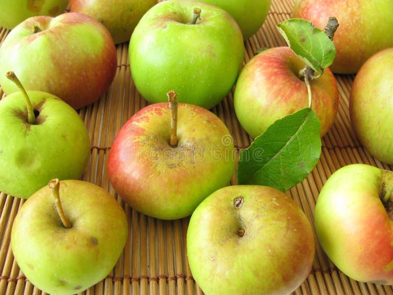 Manzanas de la huerta del prado imagenes de archivo