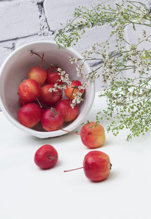 Manzanas de la primavera verde de las flores de paraíso imagen de archivo libre de regalías