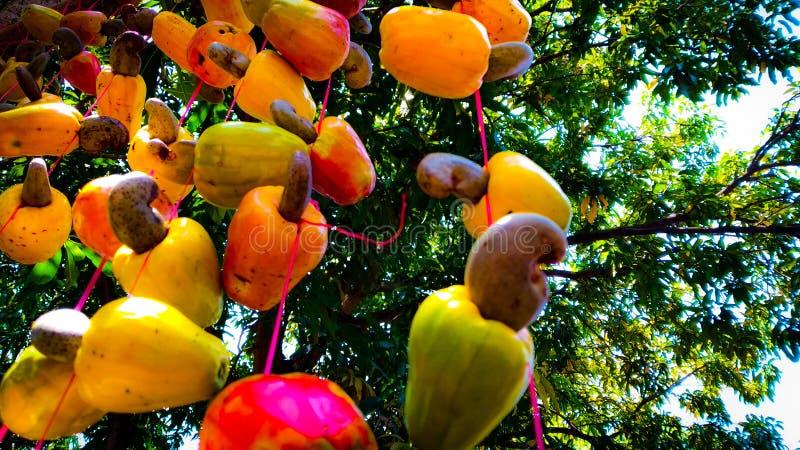 Manzanas del anacardo con las nueces en Sri Lanka imagen de archivo