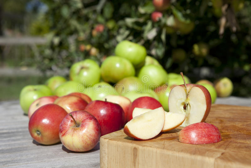 Manzanas en huerta foto de archivo