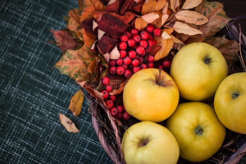 Manzanas en la tabla en una cesta con las hojas de otoño y el serbal rojo imagen de archivo