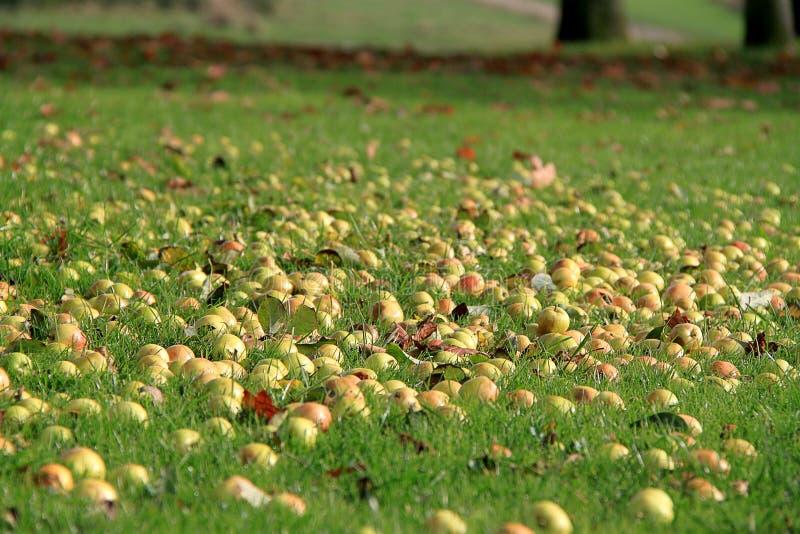 Manzanas en la tierra fotografía de archivo