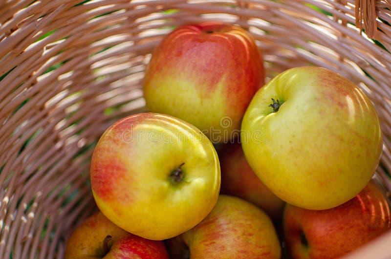 Manzanas en una cesta de madera imagenes de archivo