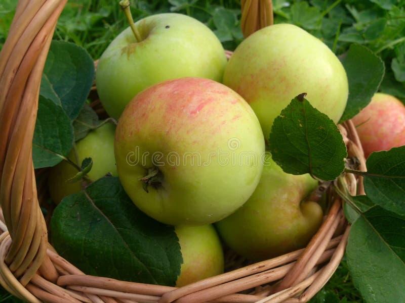 Manzanas en una cesta de madera en la hierba imagenes de archivo