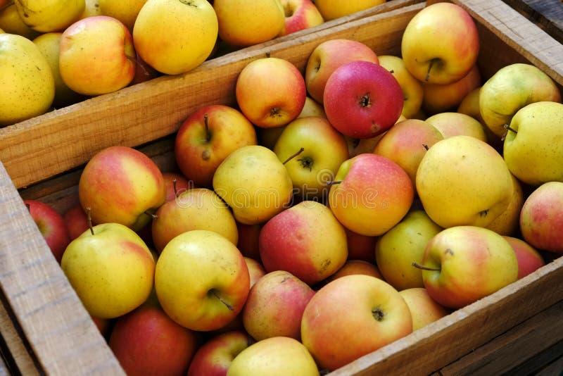 Manzanas jugosas maduras orgánicas en caja de madera en el mercado de los granjeros fotografía de archivo libre de regalías