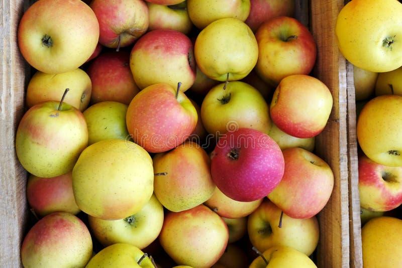 Manzanas jugosas maduras orgánicas en caja de madera en el mercado de los granjeros fotografía de archivo
