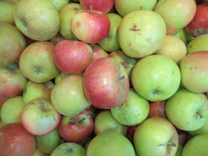 manzanas maduras de la nueva cosecha imagen de archivo libre de regalías