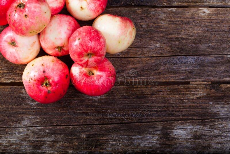Manzanas maduras rojas fotos de archivo