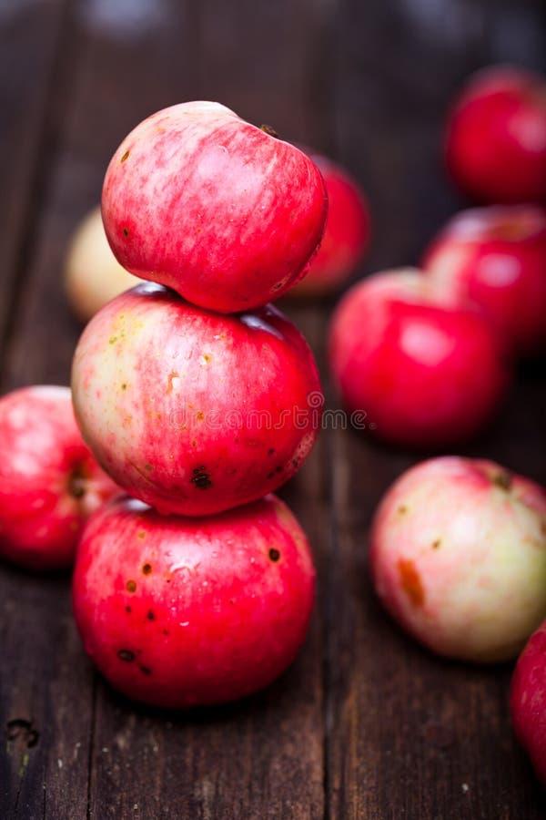 Manzanas maduras rojas imágenes de archivo libres de regalías