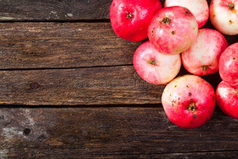 Manzanas maduras rojas fotografía de archivo