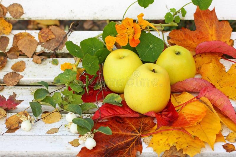 Manzanas maduras, verdes en el jardín, tiempo del otoño fotos de archivo