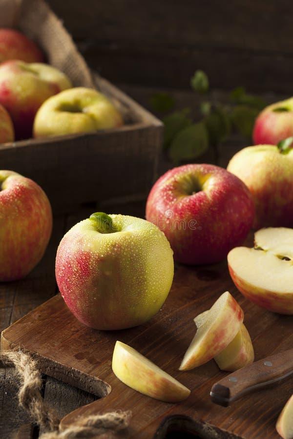 Manzanas orgánicas crudas de Honeycrisp imagen de archivo libre de regalías