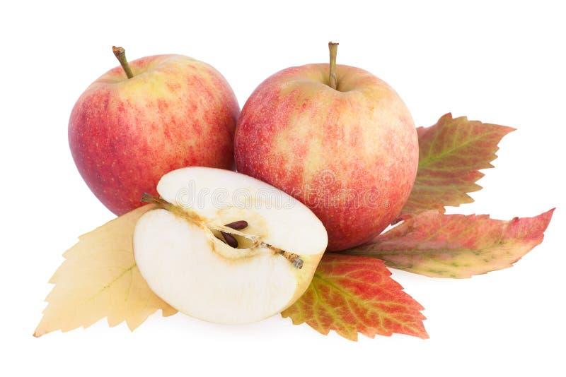 Manzanas orgánicas del otoño fotos de archivo libres de regalías