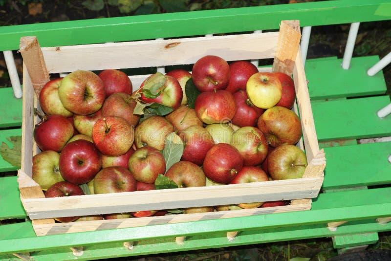 Manzanas orgánicas frescas fotografía de archivo