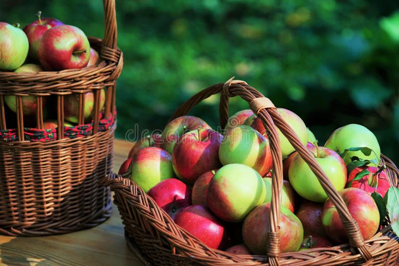 Manzanas orgánicas frescas fotos de archivo