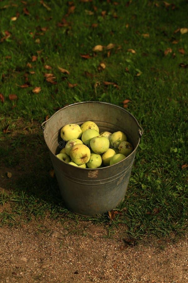 Manzanas orgánicas hermosas y sabrosas foto de archivo