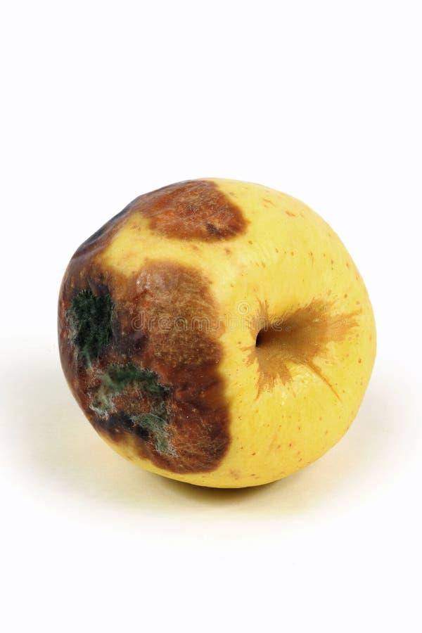 Manzanas putrefactas fotografía de archivo libre de regalías