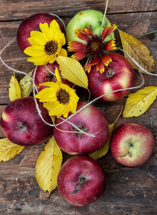 Manzanas recién cosechadas fotos de archivo libres de regalías