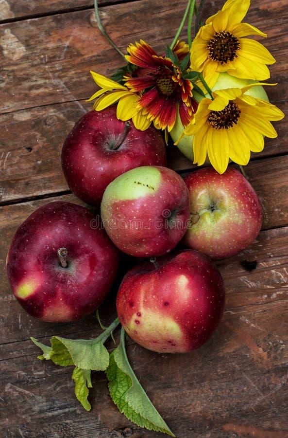 Manzanas recién cosechadas fotografía de archivo