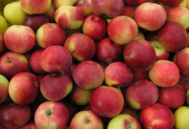 Manzanas rojas. fotos de archivo libres de regalías