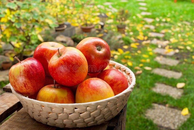 Manzanas rojas en el cuenco imágenes de archivo libres de regalías