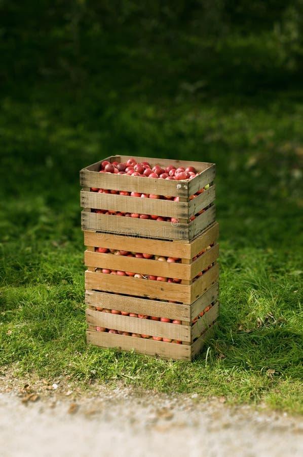 Manzanas rojas en un rectángulo fotografía de archivo