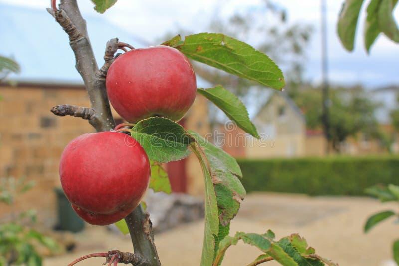 Manzanas rojas gemelas en un pueblo de piedra imagenes de archivo