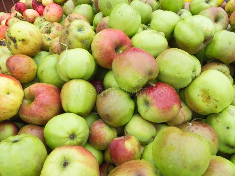 Manzanas salvajes imagenes de archivo