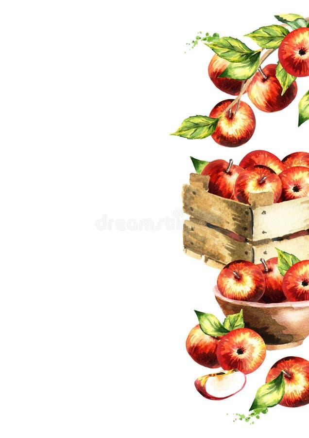 Manzanas y fondo rojos de las hojas del verde Te de la acuarela ilustración del vector