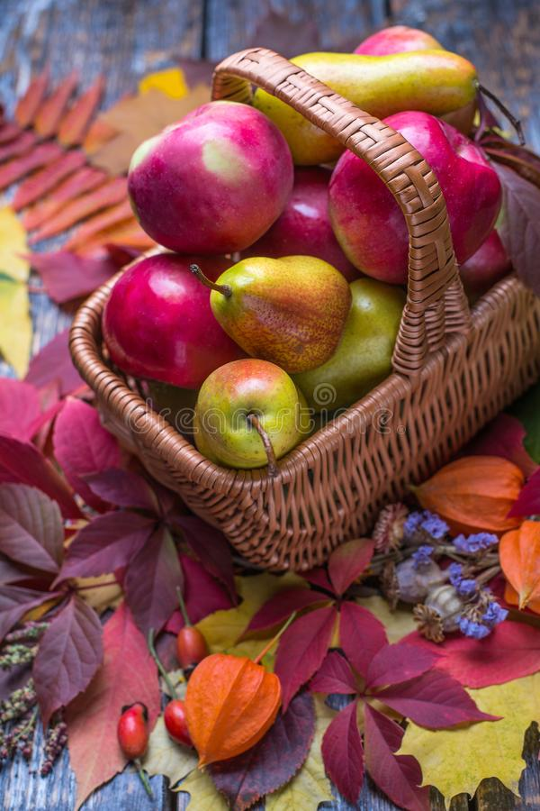 Manzanas y peras orgánicas recientemente escogidas en la cesta con las hojas de otoño en un fondo de madera imagen de archivo libre de regalías