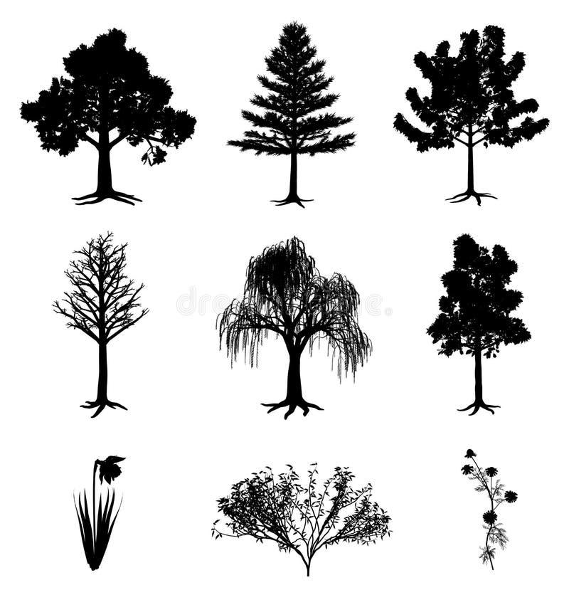 Manzanilla y arbusto del narciso de los árboles ilustración del vector