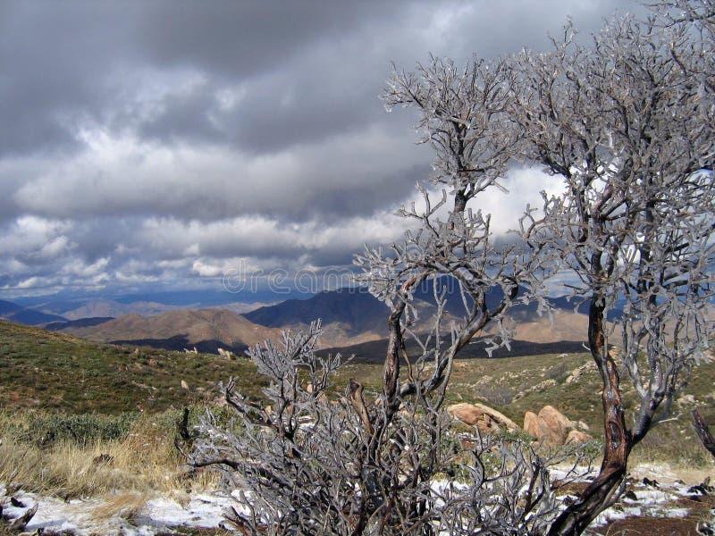 Download Manzanita Helado Con La Opinión Del Desierto Foto de archivo - Imagen de desierto, navidad: 1298766