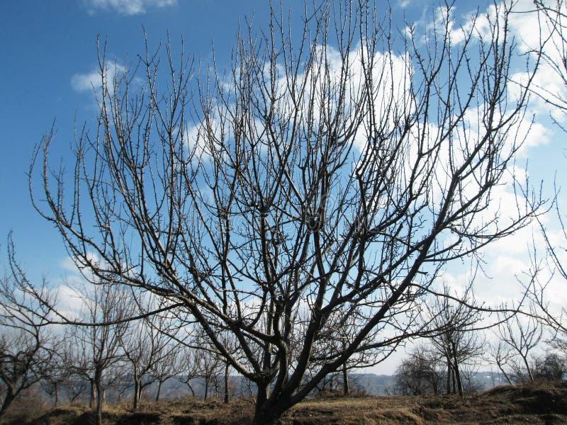 Manzano en otoño imagen de archivo libre de regalías