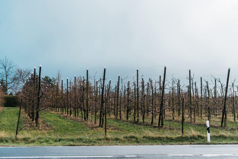Manzanos en un jardín de la granja imagenes de archivo