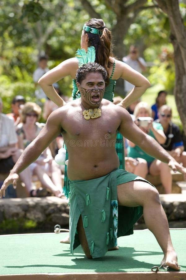 Maori Dancers 1544 stock photography