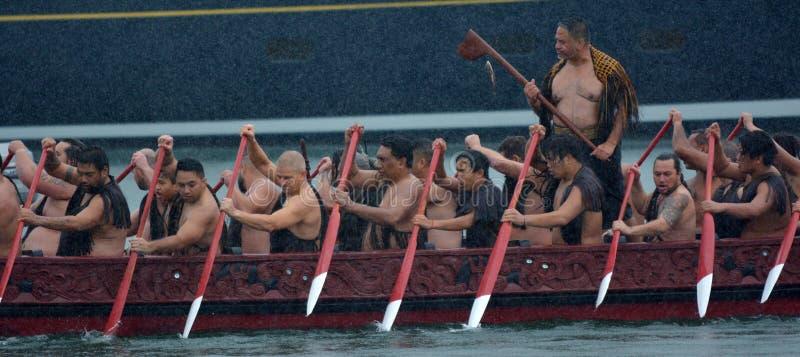 Maori- waka Erbsegeln in Auckland, Neuseeland stockfotos