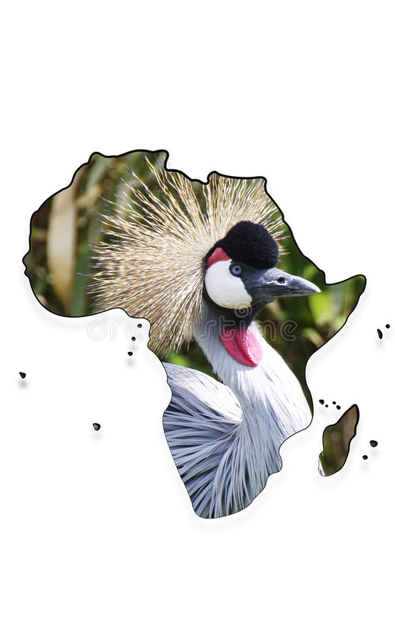 Map of the continent Africa with Grey Crowned Cran royalty free stock photo