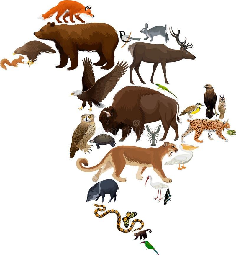 Mapa da fauna de America do Norte do vetor, elementos lisos Animais, pássaros, répteis, insetos e grupo grande anfíbio ilustração royalty free