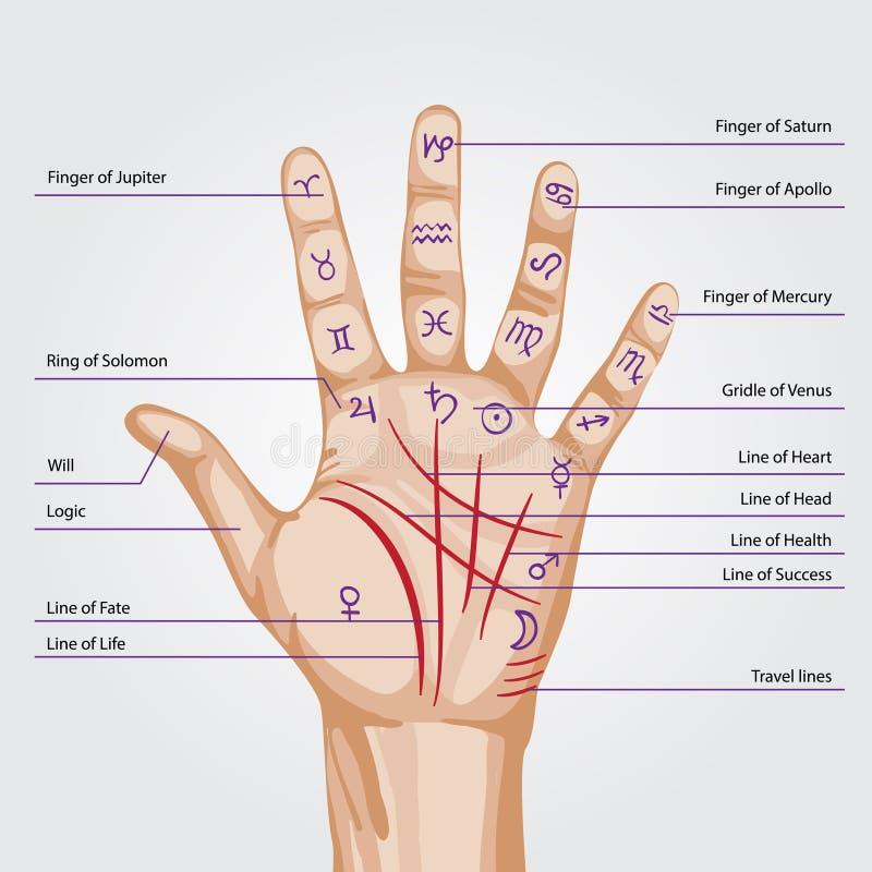 quiromancia dedo médio